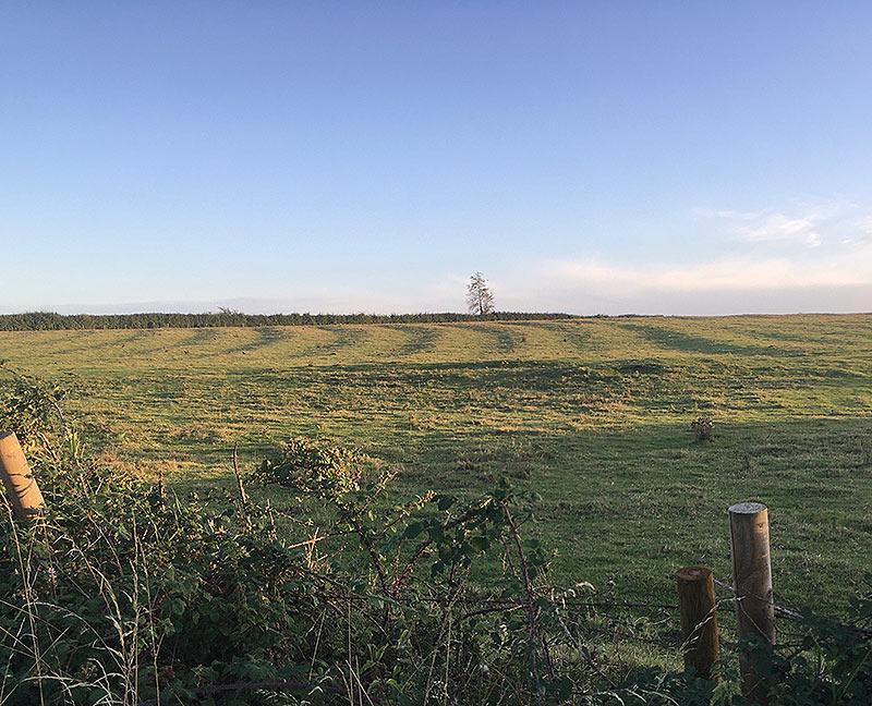Ridge & Furrow field